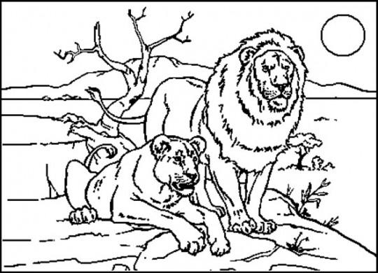 Imagen para colorear animales