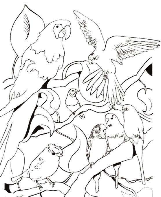 Imagenes de animales para colorear for Laminas infantiles para imprimir