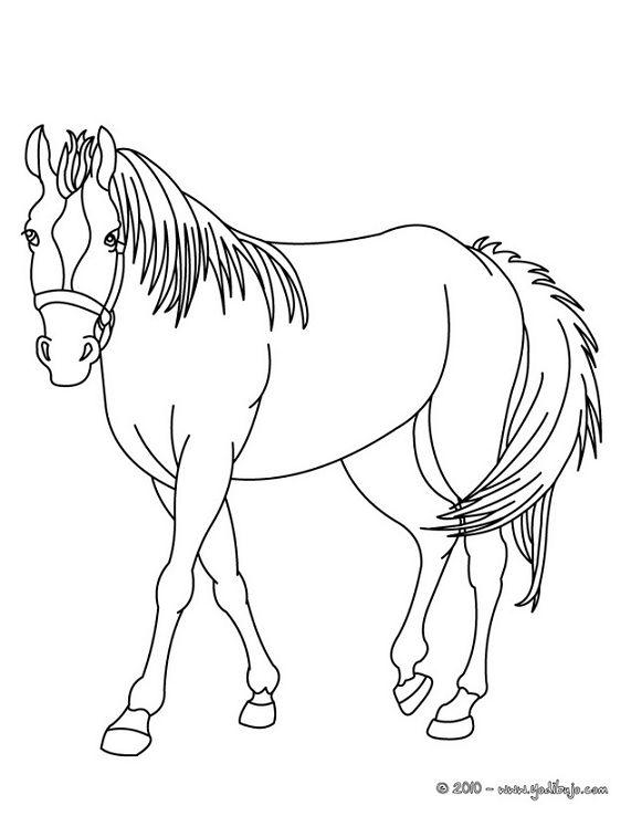 Imagenes de caballos para colorear y dibujar