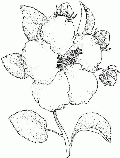 Imagenes de flores para colorear y dibujar for Plantas para dibujar