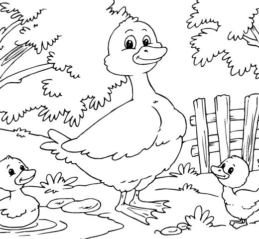 Pato-para-colorear-520x480.png