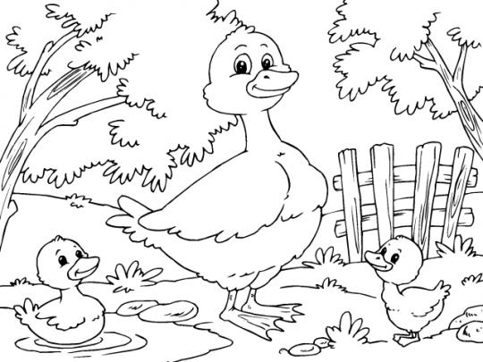 Pato para colorear for Como iluminar un parque