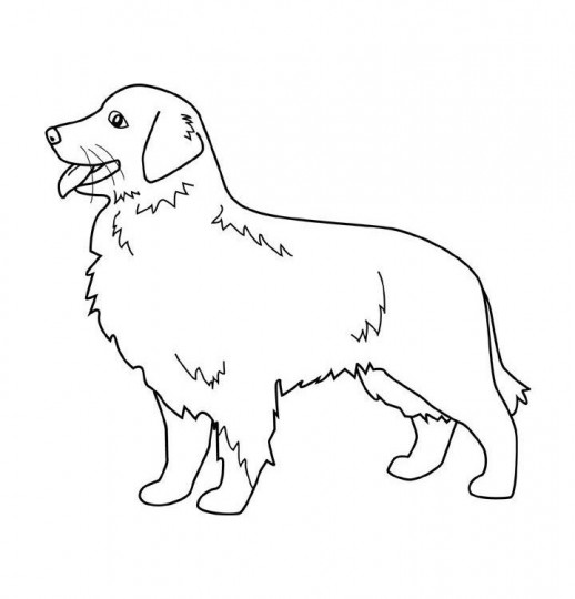 Perros para dibujar razas