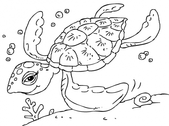 Tortugas colorear