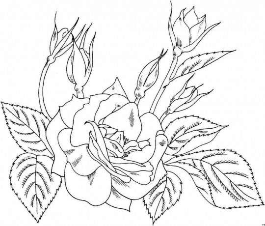 Dibujos De Rosas Para Colorear Faciles Imagui