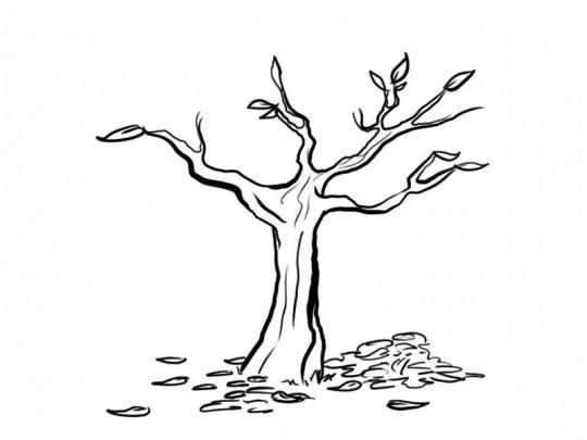 Arboles para colorear for Arboles que no se le caen las hojas en invierno
