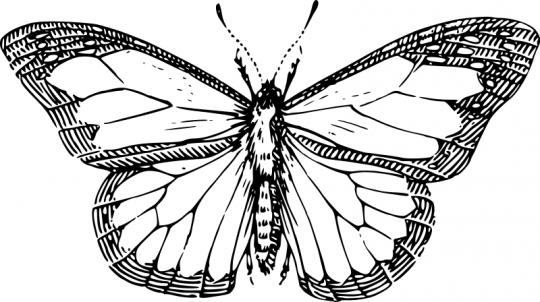 Dibujos de mariposas para colorear online