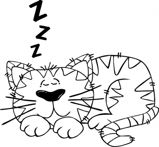 Gato para colorear online gratis