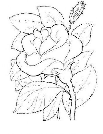 Imagenes - actividades para colorear flores - colorear