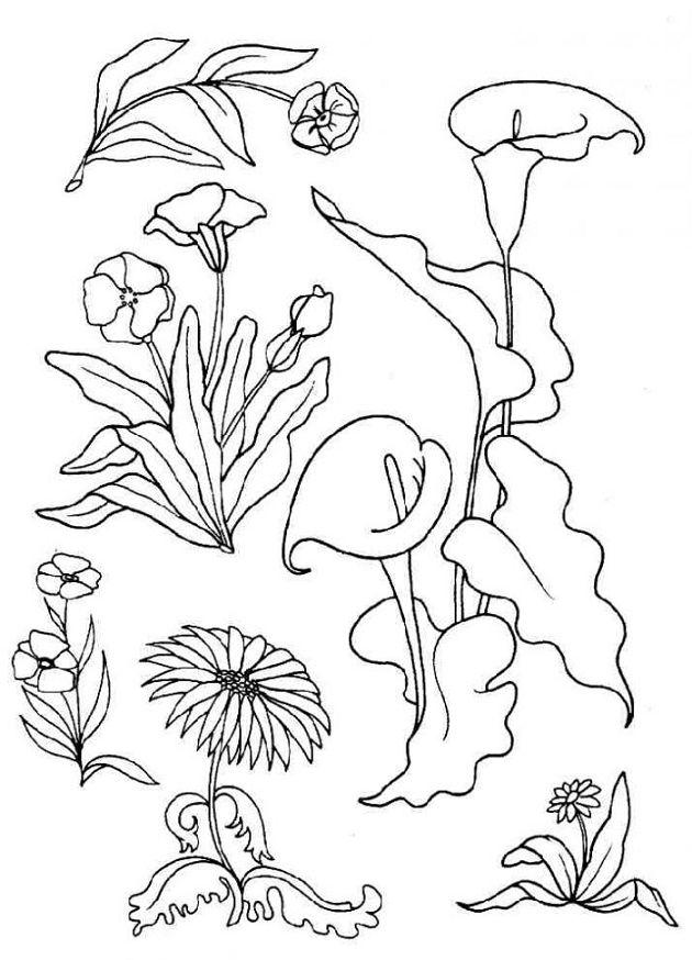 Imagenes de flores para colorear y dibujar for Plantas ornamentales para colorear