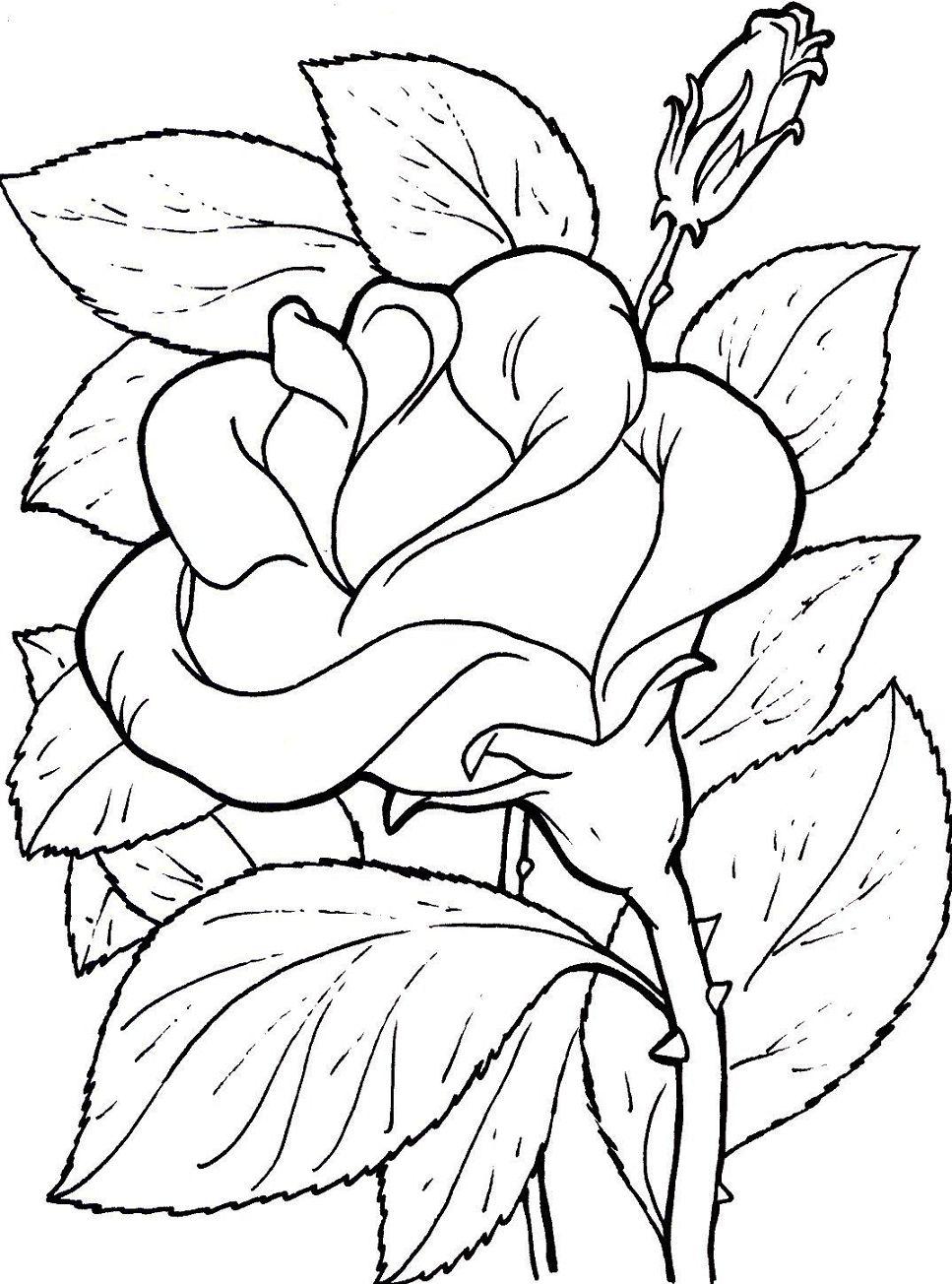 Imagenes de flores para colorear y dibujar - Plantillas para dibujar en la pared ...
