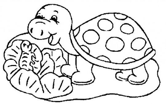 Tortugas para colorear dibujos