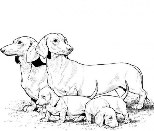 colorear perro