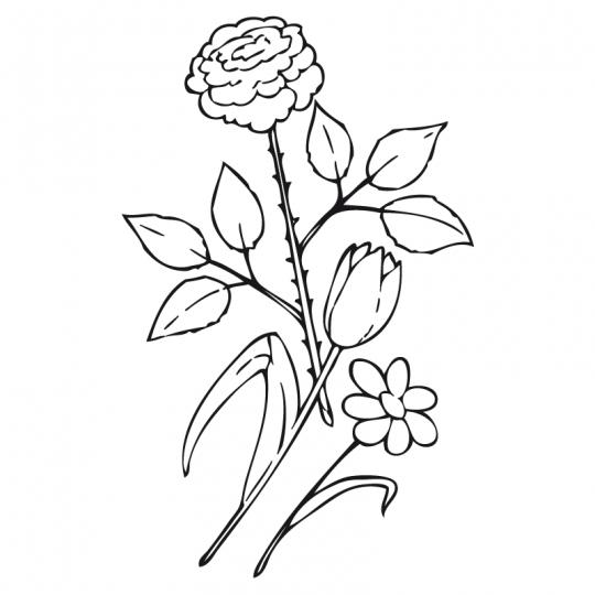 dibujar rosas